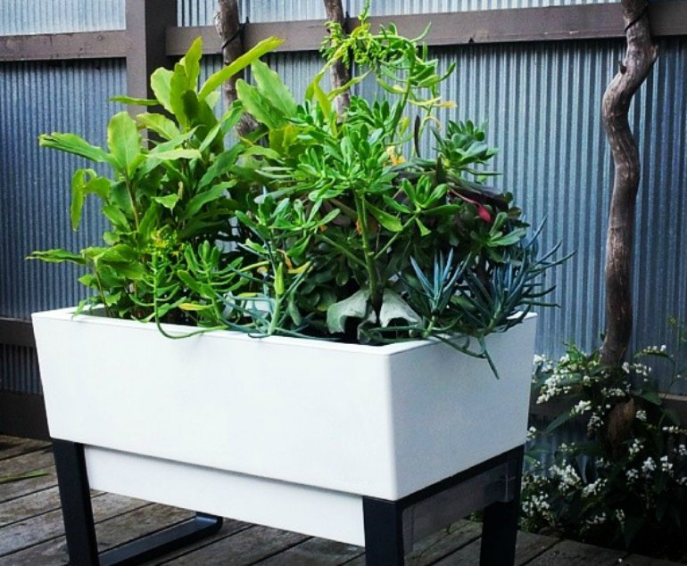 self-watering-planterss