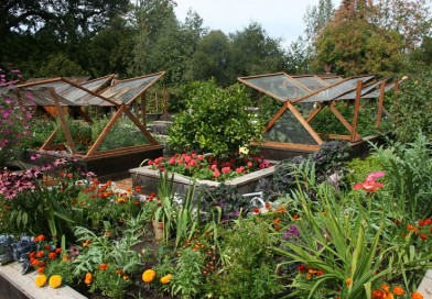 A Beginner's Guide to Growing a Small Vegetable Garden