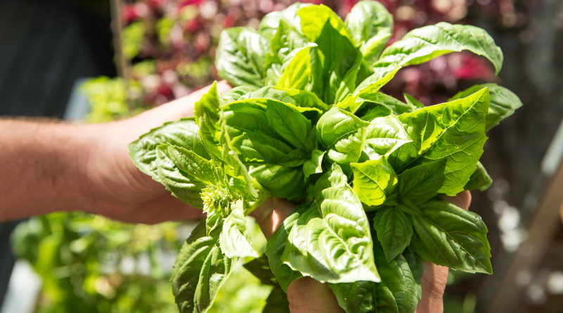 Tips to Get Your Own Container Herb Garden Started