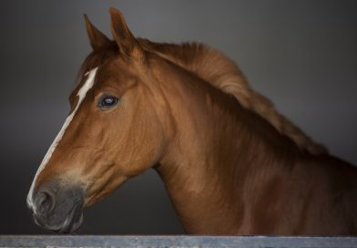 The Importance of a Pre-Purchase Exam When Buying a Horse