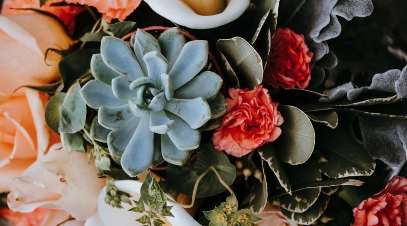 Want Low-Maintenance and Stylish Plants? Buy Succulents!