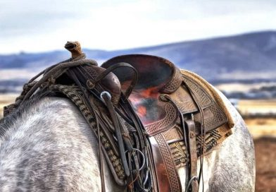 Saddle Up: The Essential Pieces of Saddlery for Your Horse
