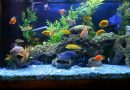 Fish Supplies That Help Keep Your Aquarium Clean at All Times
