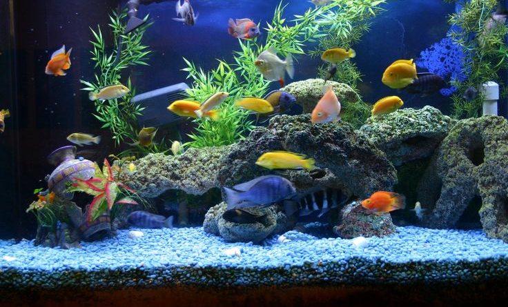 Fish Supplies That Help Keep Your Aquarium Clean at All Times