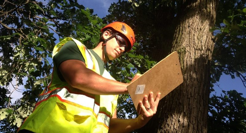 Consulting Arborists – What They Do & Do You Need One?