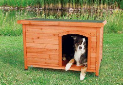 A Guide to Choosing the Ideal Dog House for Your Furry Pal