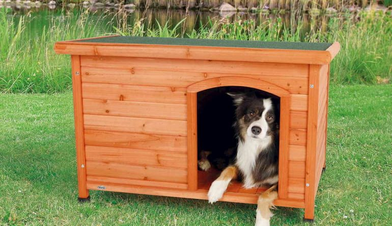 dog inside his house