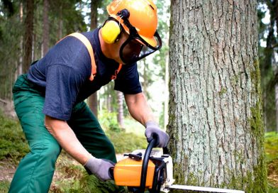 How Tree Trimmers Help Save Power Lines and Trees