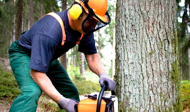 man cutting down large tree with chainsaw wearing safety gear