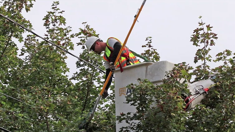professional arborist cutting tree branches