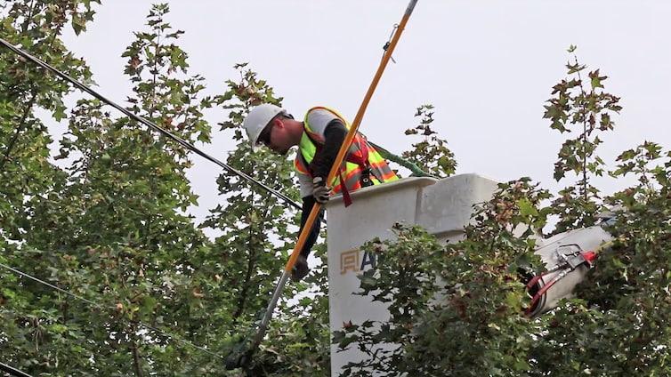 professional arborist cutting tree branches