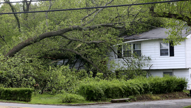 tree branches touching a power line near house
