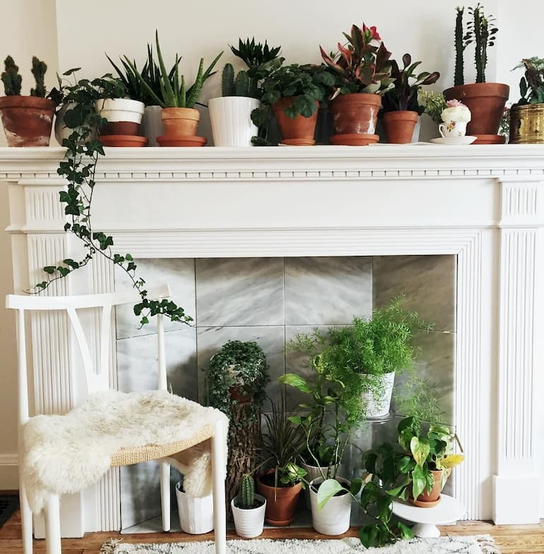pots with succulents in fireplace