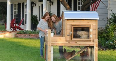 Feathered Pets: Raising Happy & Healthy Chickens in Urban Areas