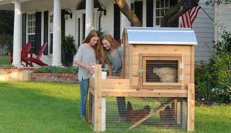 Feathered Pets Raising Happy & Healthy Chickens in Urban Areas