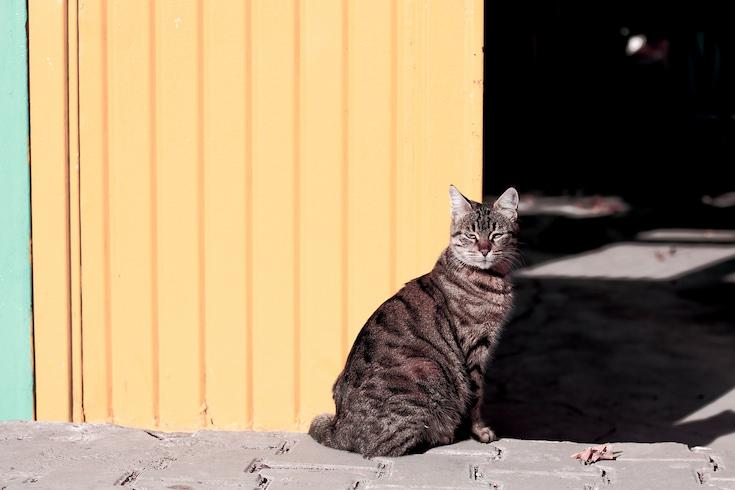 kitten next to a wall